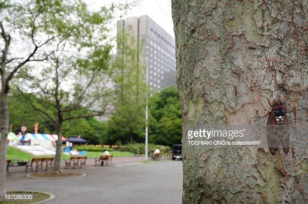 large brown cicada on tree trunk in hibiya park - cicala foto e immagini stock