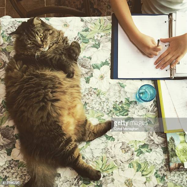 Large Cat and Homework
