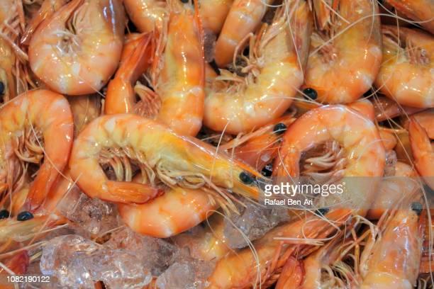 large cooked ocean king prawns - rafael ben ari stock-fotos und bilder