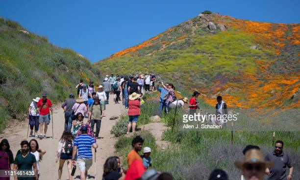 Large crowds fill the path to view the super bloom at the Lake Elsinore Poppy Fields in Walker Canyon after the city closed the area on March 18 2019...
