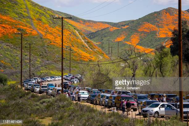 Large crowds visit the super bloom at the Lake Elsinore Poppy Fields in Walker Canyon after the city closed the area on March 18 2019 in Lake...