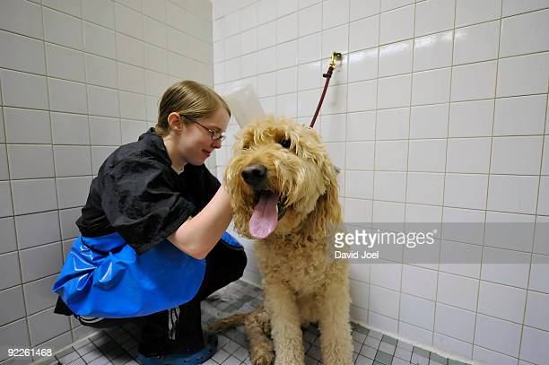 Large dog being shampooed in shower stall