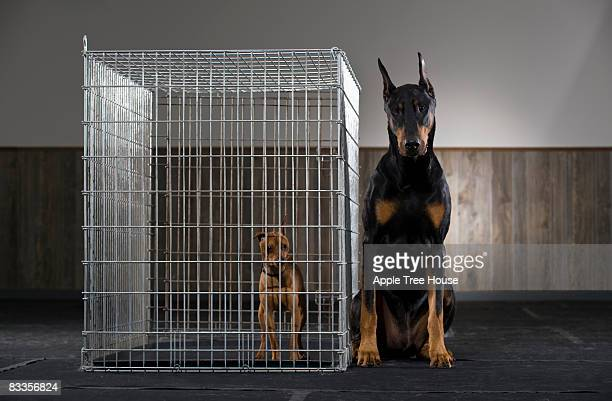 Large dog next to small dog in cage