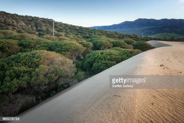 large dune in front of pine forest - Spain tourism destination near Tarifa, Cadiz, Andalusia, Spain