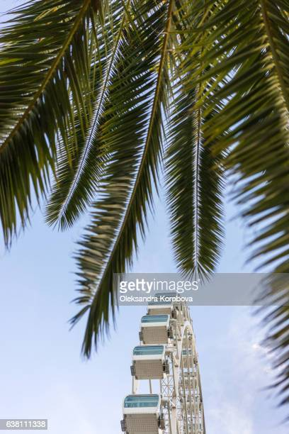 large ferris wheel in malaga, spain. observation weel with a panorama of the tropical city and palm trees - istock photo stock pictures, royalty-free photos & images