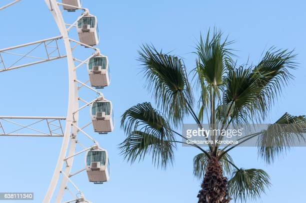 Large ferris wheel in Malaga, Spain. Observation weel with a panorama of the tropical city and palm trees