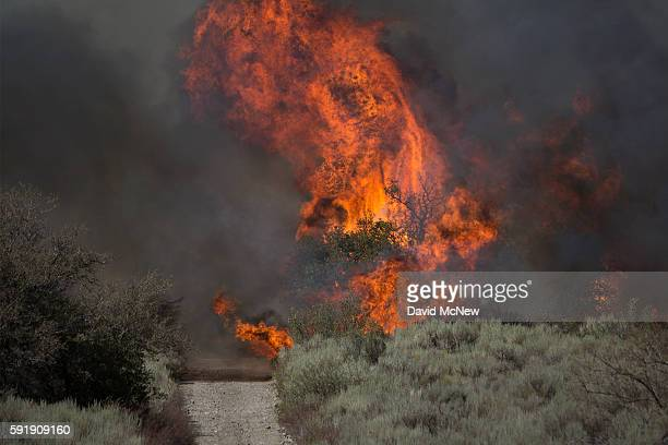 Large flames block the road ahead in a remote section of the San Bernardino National Forest during the Blue Cut Fire on August 18 2016 near...