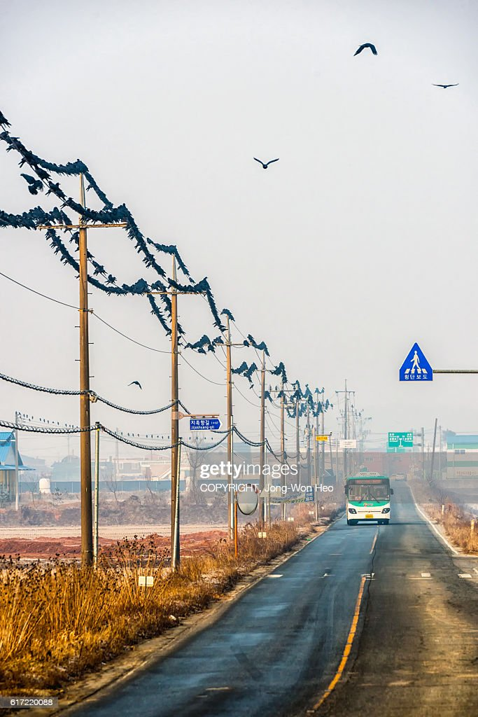 A large flock of crows on the electric lines by the rural road : Stock Photo