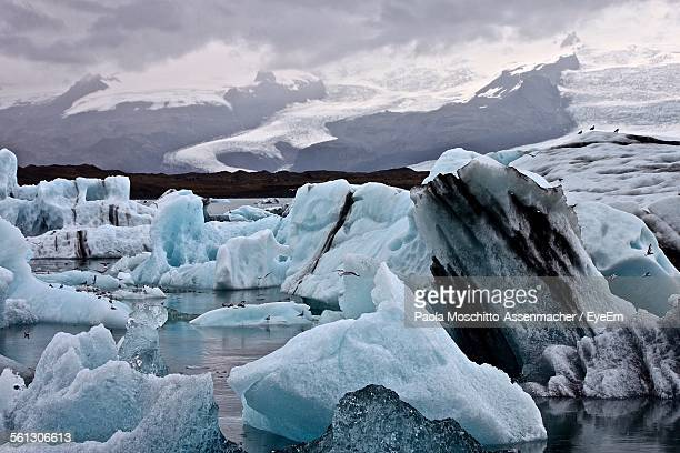 large flock of seagulls on glacier in jokulsarlon lake - north pole stock pictures, royalty-free photos & images