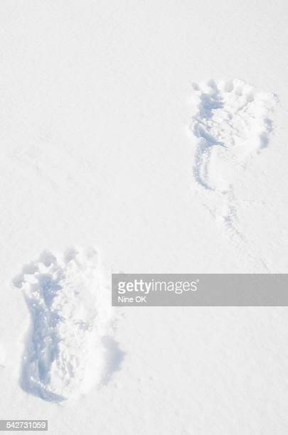 large footprints in snow - bigfoot fotografías e imágenes de stock