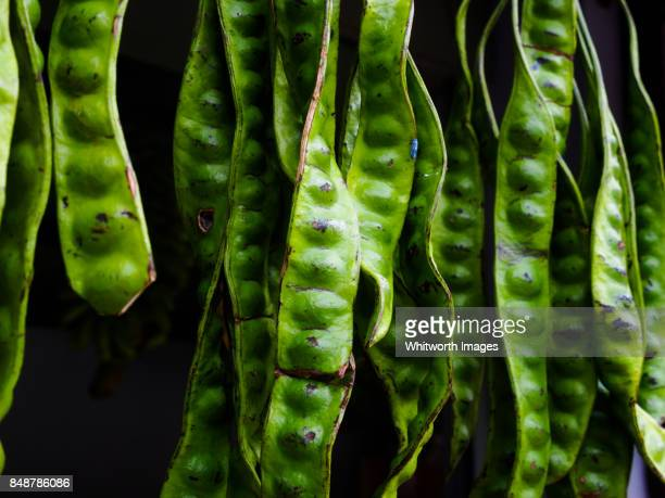 Large green bitter beans at market stall in Perak, Malaysia