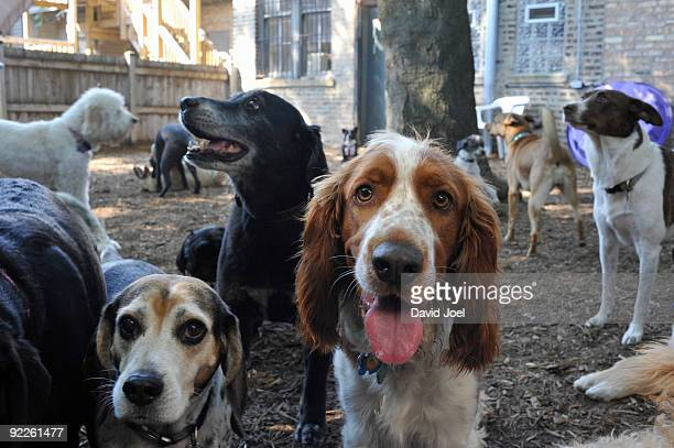 Large group of dogs- many breeds