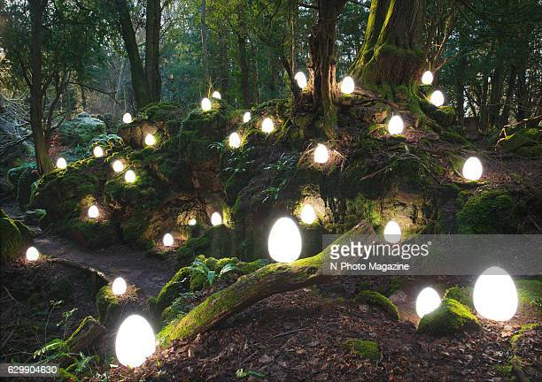 Large group of glowing orbs on the forest floor, taken on January 20, 2016.