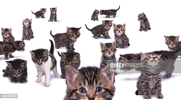 large group of kittens - large group of animals stock pictures, royalty-free photos & images