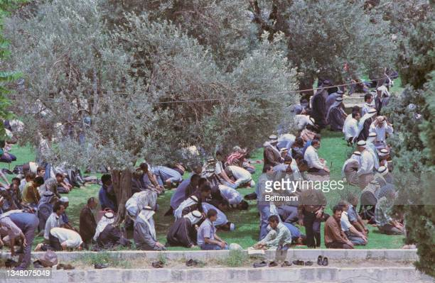 Large group of Muslim men, some wearing keffiyehs, kneeling on grass as they pray in the shade of an olive tree in an unspecified area of Jerusalem,...