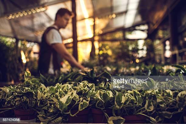 Grand groupe de plantes en pots avec un collègue en arrière-plan.