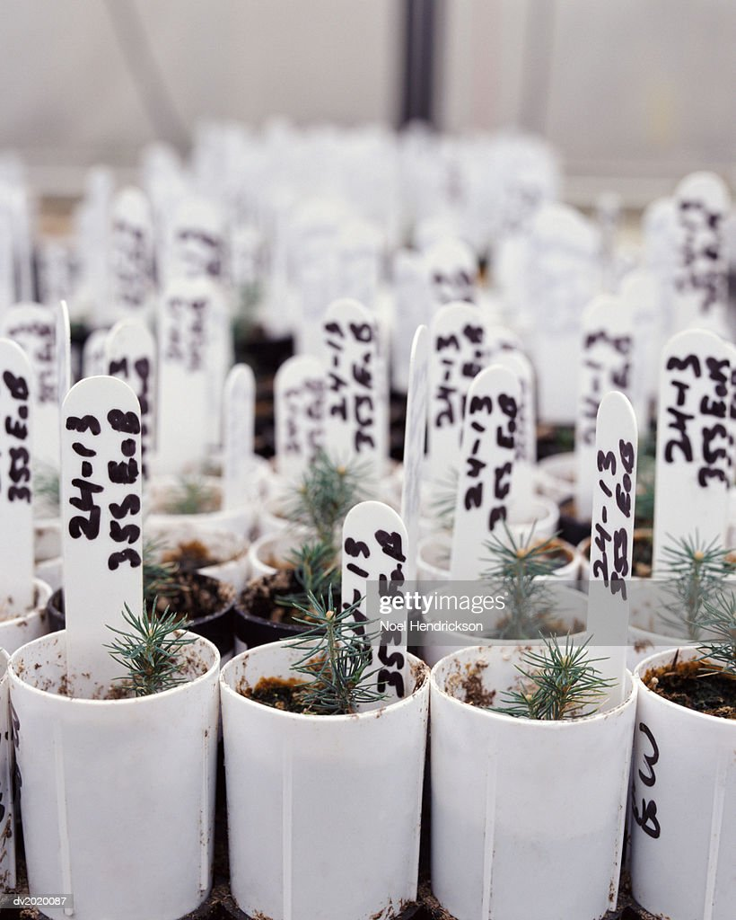 Large Group of Potted Plants with Labels, in Differential Focus : Stock Photo
