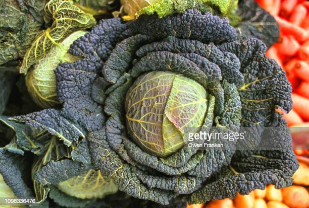 a large head of green cabbage in a paris outdoor produce market - image stock-fotos und bilder