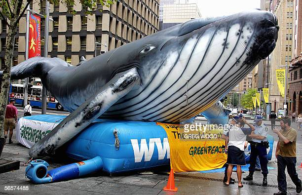 A large inflatable whale sits in Sydney's city centre 12 January 2006 after being placed by Greenpeace protesters Greenpeace activists also later...