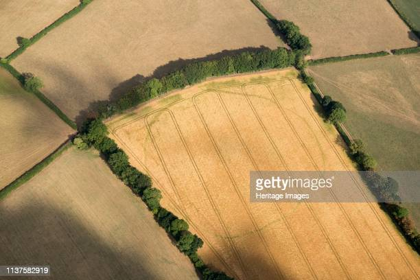 Large likely prehistoric enclosure crop mark near Churchstanton Somerset 2018 Artist Historic England Staff Photographer
