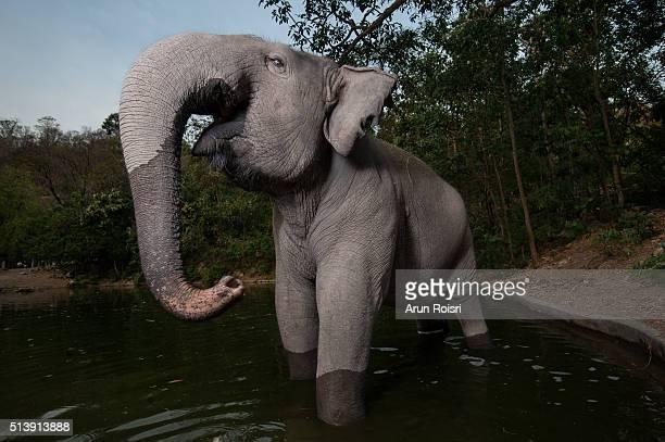 Large mammals in Thailand