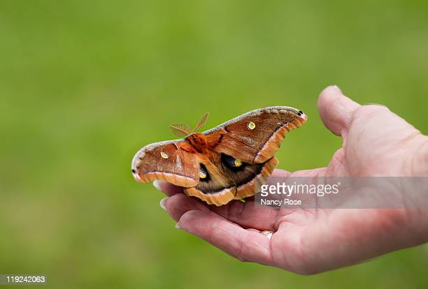 large moth on womans hand - bedford nova scotia stock pictures, royalty-free photos & images