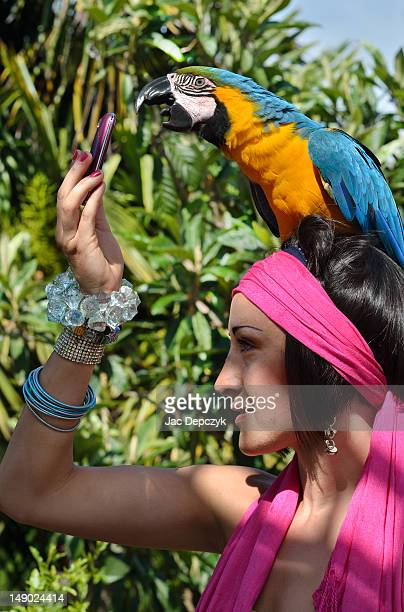 large parrot answering her friend's mobile phone - depczyk stock pictures, royalty-free photos & images