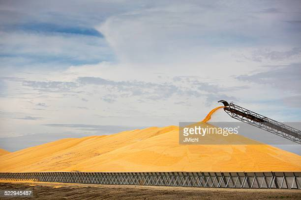 Large Pile of Corn At Midwest Ethanol Plant.