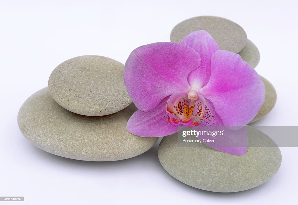 Large pink orchid and round pebbles on white : Stock Photo