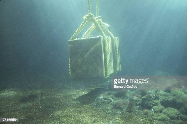 Large ropes lower the sunken safe from the Italian ocean liner the Andrea Doria to the bottom of the shark tank at the New York Aquarium Brooklyn New...