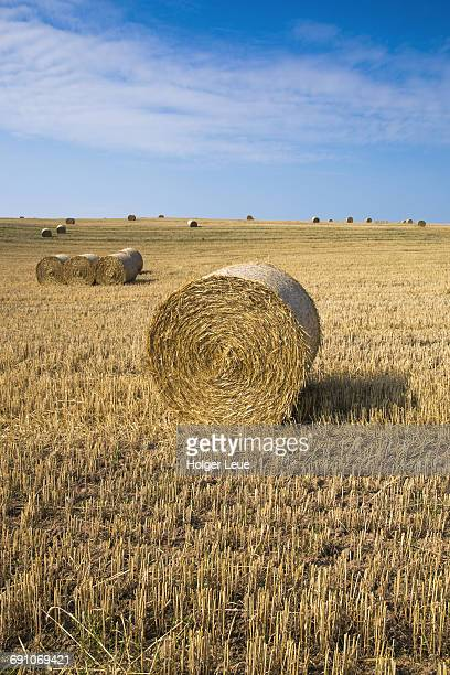 Large round straw bales on field