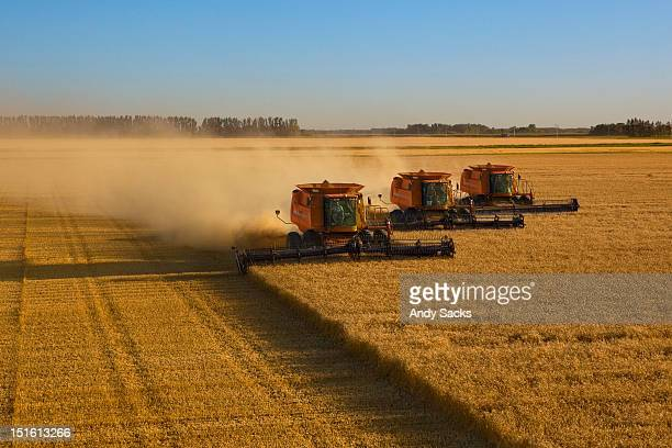 large scale wheat harvest operation - grain harvest stock pictures, royalty-free photos & images