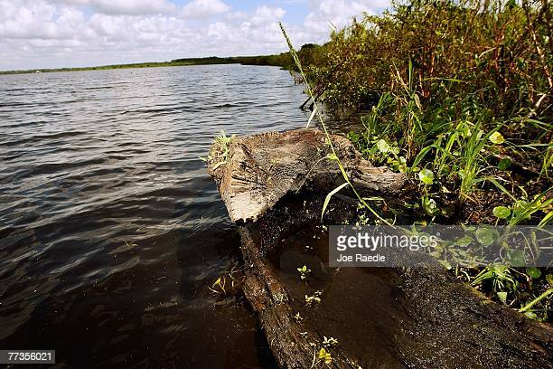 A large section of a dugout canoe possibly more than 1000 years old rests on the bank of Lake Trafford October 16 2007 in Immokalee Florida As lake...