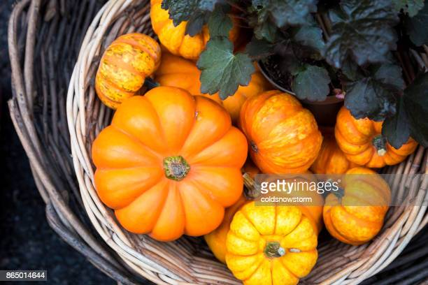 large selection of halloween pumpkins on display at borough market, london, uk - pumpkin stock pictures, royalty-free photos & images