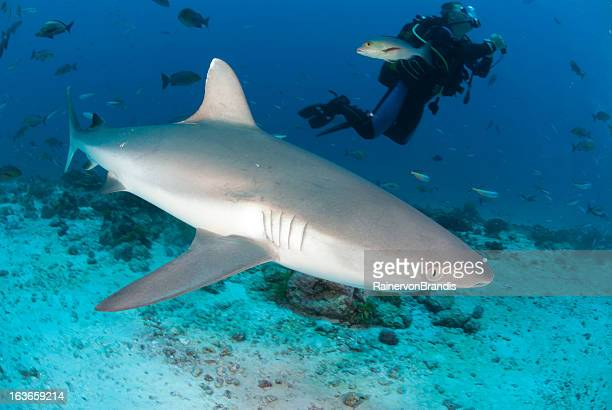 large shark and scuba diver