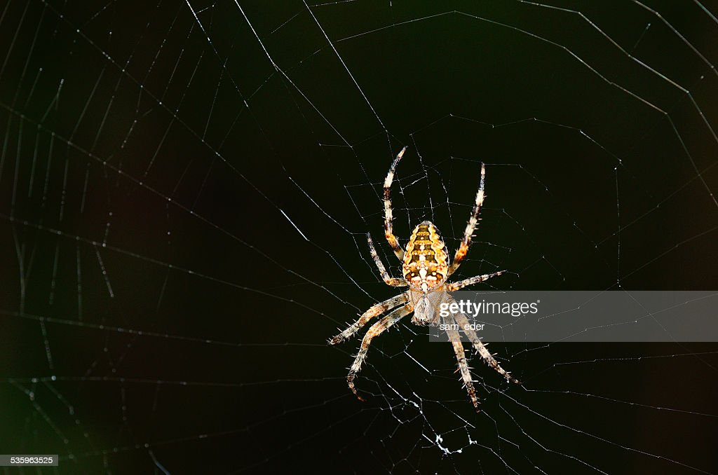 large spider with net : Stock Photo