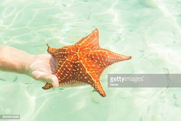 Large starfishes in hand