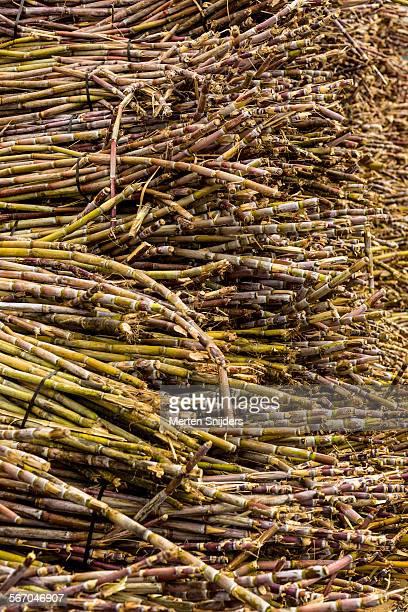 large stock of sugarcane at factory - merten snijders - fotografias e filmes do acervo