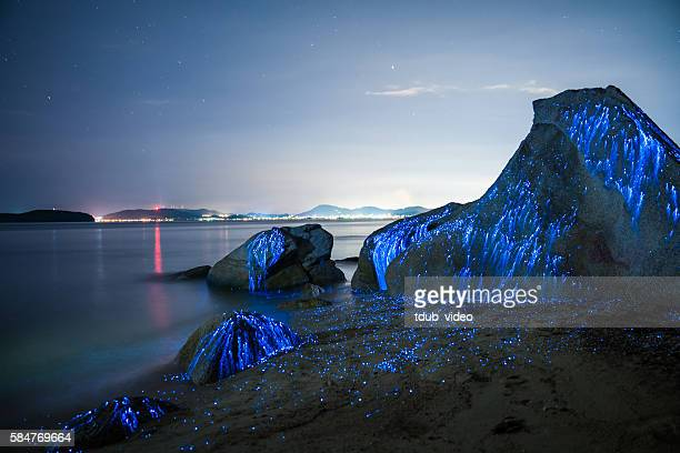 large stones appear to weep on the beach - glowworm stock pictures, royalty-free photos & images