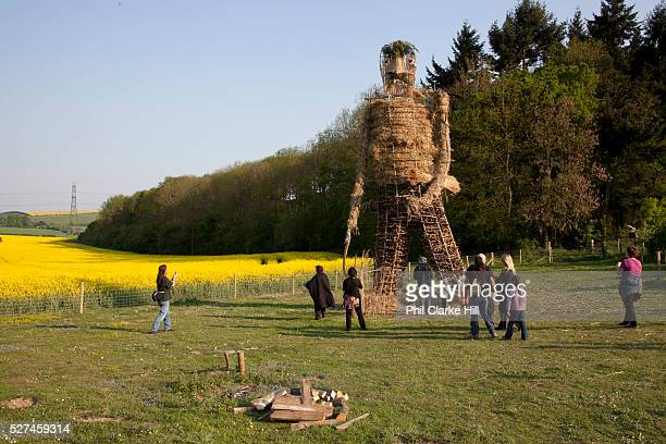 Large straw wickerman ready for burning The annual Beltane celebrations at Butser ancient farm Hampshire marking the beginning of the British summer