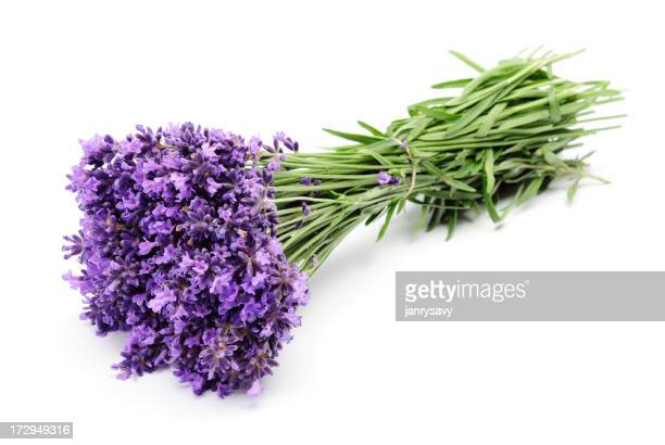 Large tied bunch of purple lavender
