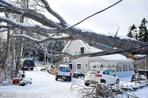 A large tree one of many fell across power lines from the high winds and snow in the recent storm cutting off electricity to homes on Washburn Road...