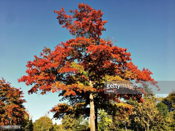 A large tree with leavea in bright autumn colors