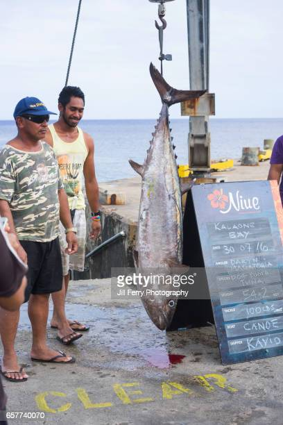 large tuna caught on a handline from an outrigger canoe - niue island stock photos and pictures