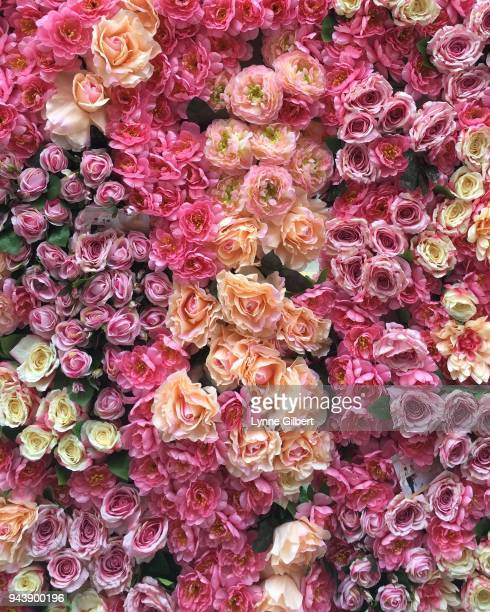 a large wall of beautiful roses are lined up for a wedding backdrop - purple roses bouquet ストックフォトと画像