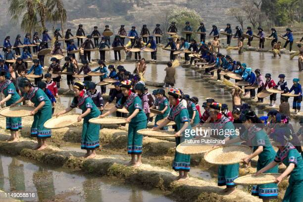 Largescale terrace dance yuanyang yunnan ChinaPHOTOGRAPH BY Costfoto / Barcroft Media