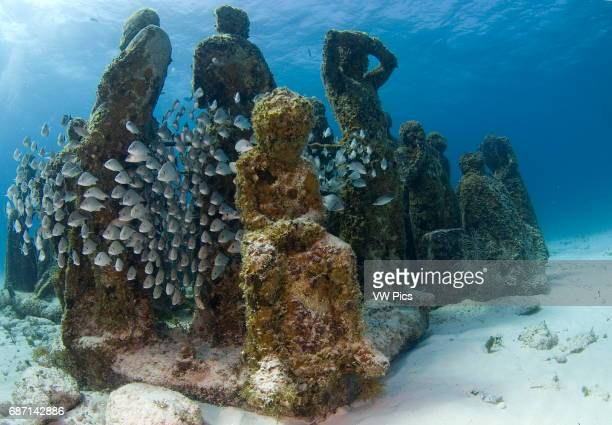 Largest underwater museum located in Cancun Mexico caribbean sea, sculptures made out of real people to drive away tourism from natural reefs and...