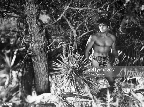 Larry 'Buster' Crabbe stars in 'King Of The Jungle' directed by H Bruce Humberstone for Paramount A monkey perches in a nearby tree