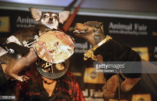 Larry Flynt the hustler dog and Triumph the insult comic dog take part in the Animal Fair Magazine's Annual Canine Pet Halloween Party October 30...
