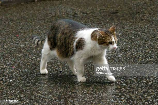 Larry, the 10 Downing Street cat and Chief Mouser to the Cabinet Office seen in Downing Street.